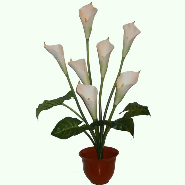 Цветок калла в горшке высота 50 см в