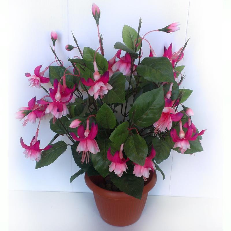 О цветах и растениях Как ухаживать за бегонией в домашних