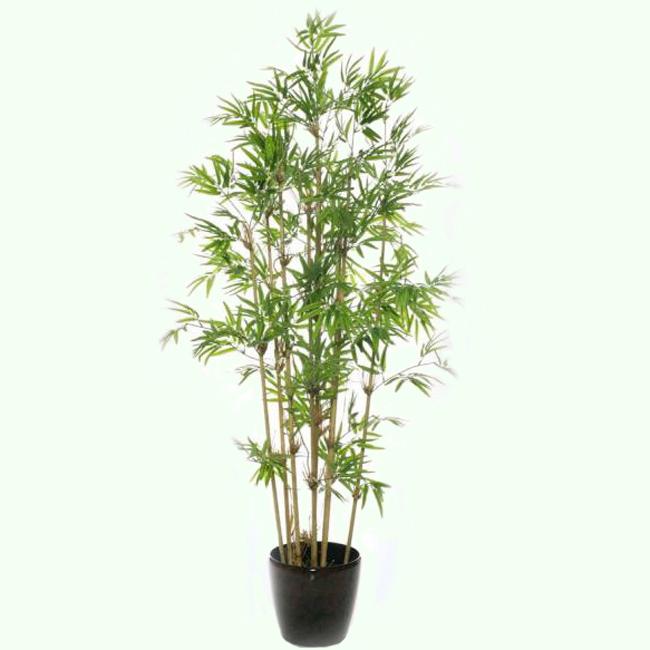 фото дерево бамбук