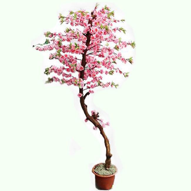 Букет 1000 сакура растение купить спб барнаул дешево
